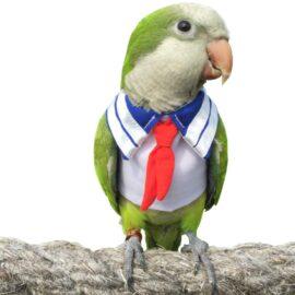 Pet Small Animals Clothes Birds Flight Suit for Parrots African Greys Parakeet Cockatiel Sun Conure, Cute School Uniform Tuxedo Business Suit for Christmas Party Birthday Pet Shows Cosplay Photo Prop