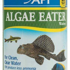 API Algae Eater Fish Food