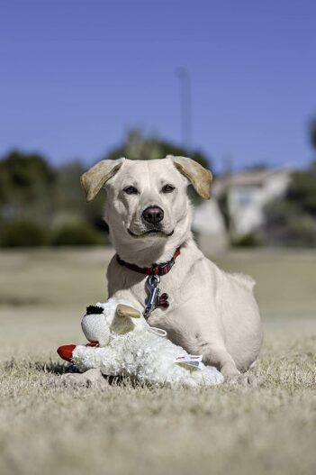 Multipet Plush Dog Toy, Lambchop